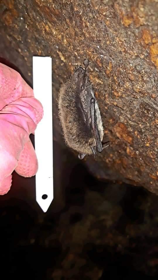 netopýr valhala